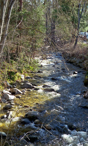 Lithia Creek